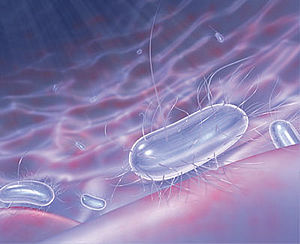 Description: http://www.vidarmonia.pt/images/SANITAS/Bacteria.png